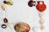 Seashells on the white sand for background — Stock Photo
