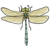 Dragonfly painting — Stock Photo