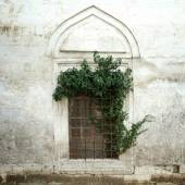 Ivy on an old window and wall — Stock Photo