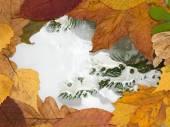 Poça congelada — Fotografia Stock