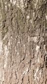 Casca de árvore — Foto Stock