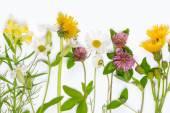 Fresh blooming wildflowers — Stock Photo