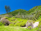 Rainforest Seychelles — Stock Photo
