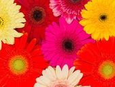 Bright summer flowers — Stock Photo