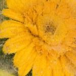 Yellow flower — Stock Photo #61918169