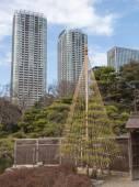 Growing bonsai — Stock Photo
