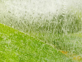 Bubbles on green surface — Stock Photo