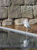 Pretty clever heron — Stock Photo