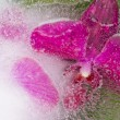 Abstraction with delicate orchids — Stock Photo #69371925