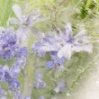 Vertical abstraction of lavender flowers — Stock Photo #75492131