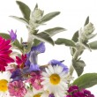 Summer bouquet of colorful flowers — Stock Photo #75563861