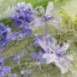 Abstraction of wild lavender flowers — Stock Photo #77523312