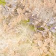 Delicate floral abstraction — Stock Photo #78095804