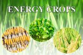 Energy crops wording for background — Foto Stock