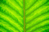Green leave texture — Stock Photo