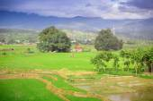 Natural landscape view rice filed on mountain — Stock Photo