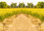 Countryside road way in Thailand  — Stock Photo