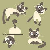 Set of Siamese cats. Vector illustration — Stock Vector