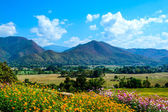 Flower fields with mountain and blue sky — Stock Photo