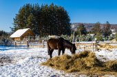 Horses in the village in the Ural Mountains — Stock Photo