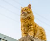 Red cat on a fence — Stock Photo