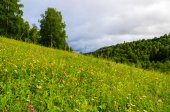 Meadow on a mountainside with forest in the background. — Stock Photo