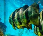 Fish that live in the Red Sea — Fotografia Stock