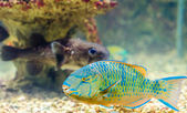 Fish that live in the Red Sea — Stock Photo