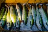 Fresh fish at the fish market in Hurghada. Egypt — Stock Photo