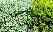 зеленый стенной фон листьев — Стоковое фото