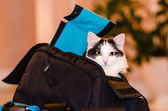 The cat is sitting in a bag — Stock Photo