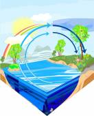 Water cycle in nature — Stock Vector