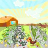 Rural landscape with kitchen-garden — Stock Vector