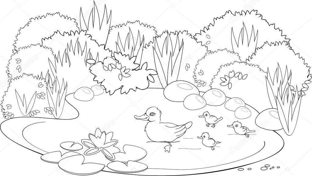 estanque de los patos para colorear archivo im genes