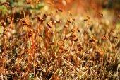 Beautiful moss — Stock Photo