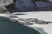 Fish farm in frozen lake ,Eastern Anatolia — Stock Photo