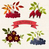 Autumn. Mountain ash, chokeberry, rose, marigold — 图库矢量图片