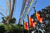 Tibetan Buddhist prayer flags — Stock Photo