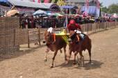Jockey racing Bulls at Madura Bull Race, Indonesia — Stock Photo