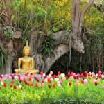 Buddha in meditation among flowers — Stock Photo #66206501
