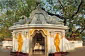 Sacred Buddhist Maha Bodhi tree, Sri Lanka — Stock Photo