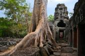 Ancient Angkor Era temple overgrown by trees, Cambodia — Foto de Stock