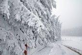 Zimní les ve sněhu — Stock fotografie