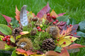Colorful autumnal background — Stock Photo