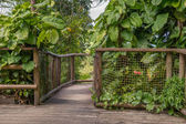 Walkway in the Park of Guadeloupe — Stock Photo