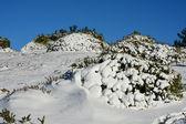 冬。サラテ。Sapain. — ストック写真