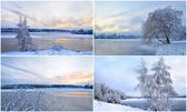 Collage of winter landscapes with trees in hoarfrost — Stock Photo