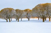 Frosty brittle willows in a snowy park — Stock Photo