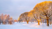Panoramic view of the brittle willows in a winter park — Stock Photo