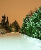 Rabbit tracks on a pristine snow — Stock Photo
